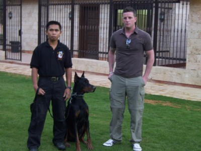 K9 Working Dogs | Family Protection Dogs, Personal Protection Dogs & Executive Protection Dogs For Sale