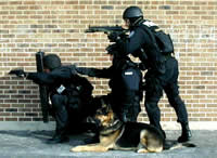 Police K9's For Sale | K9 Certification Standards | K9 Handler Training Courses | State K9 Handler Certification Standards