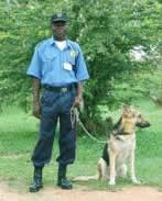 Guard Dogs & Security Dogs For Sale