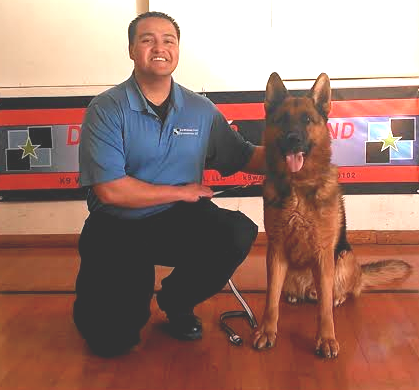German Shepherd Police Dogs For Sale | Germany Import Police K9's For Sale | DEA & ATF Federally Licensed K9 Training Center - K9 Working Dogs International, LLC